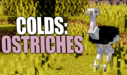 Colds: Ostriches